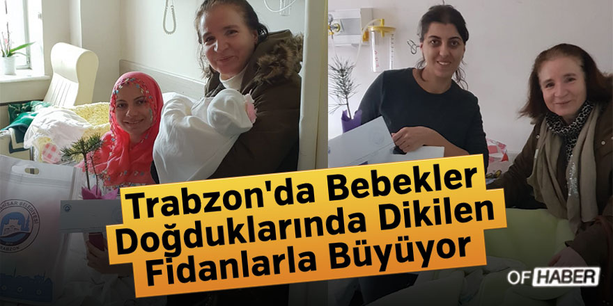 Trabzon'da Bebekler Doğduklarında Dikilen Fidanlarla Büyüyor