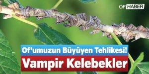 Of'umuzun Büyüyen Tehlikesi! Vampir Kelebekler